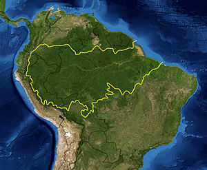 300px-Amazon_rainforest